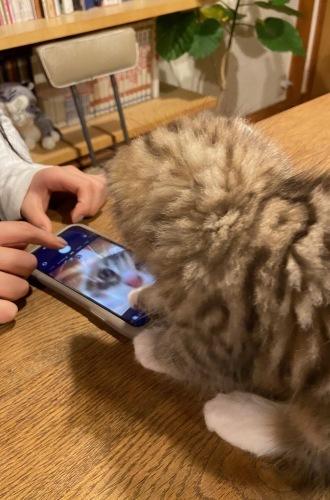 クリスマスにやって来た子猫のユール_b0325640_23111773.jpg