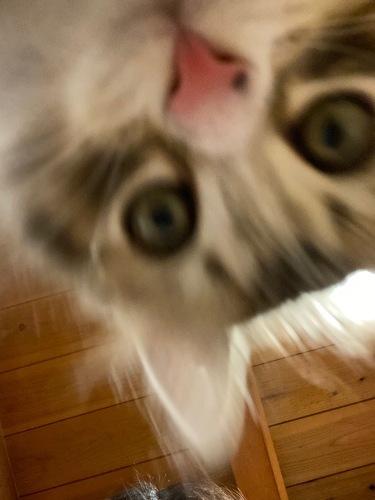 クリスマスにやって来た子猫のユール_b0325640_23112846.jpg