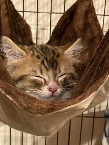 クリスマスにやって来た子猫のユール_b0325640_23113634.jpg