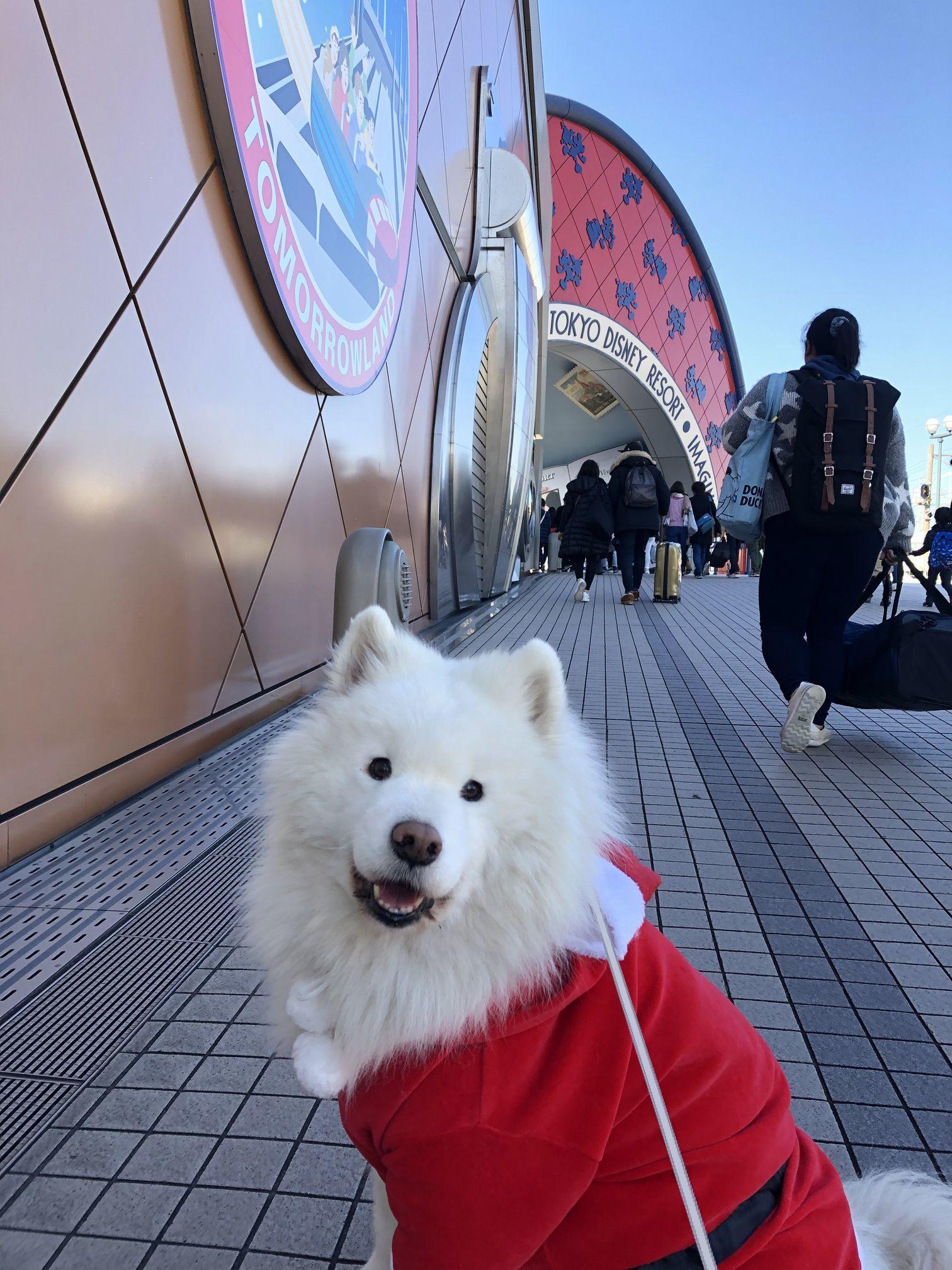 2019年12月 合同お誕生会オフ in Ven! Kitchen&Dog Garden その2_f0128542_02151703.jpg