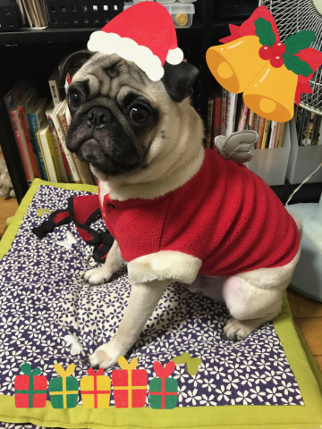 Merry Christmas♪_a0051443_18310807.jpeg