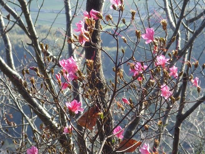 英彦山で雪見登山のはずが・・御所ヶ岳へ_e0164643_19352428.jpg