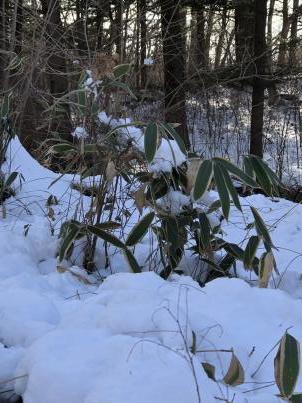 雪掻きでスタート_c0341450_20272063.jpg
