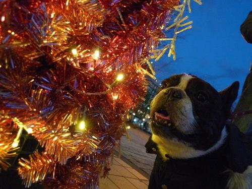 そばにいる人もいない人も悲しみの中でも幸せなクリスマス!_b0307951_22552266.jpg