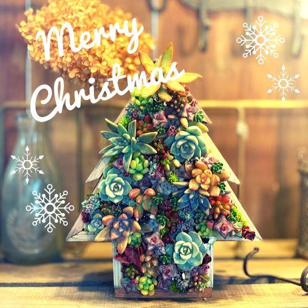 メリークリスマス!_f0220152_18045848.jpg