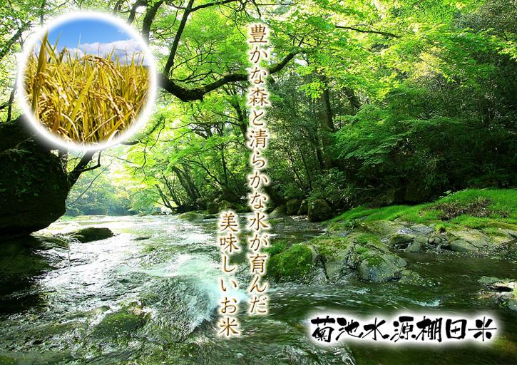 熊本の美味しいお米(七城米、菊池水源棚田米、砂田のれんげ米)大好評発売中!こだわり紹介 その2_a0254656_14442640.jpg