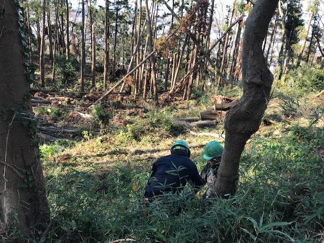 ③山桜植樹で累計475本、500本目前:12・21六国見山手入れ_c0014967_10352934.jpg