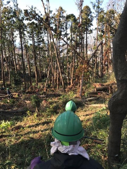 ③山桜植樹で累計475本、500本目前:12・21六国見山手入れ_c0014967_10354174.jpg