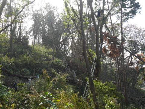 ③山桜植樹で累計475本、500本目前:12・21六国見山手入れ_c0014967_10374256.jpg