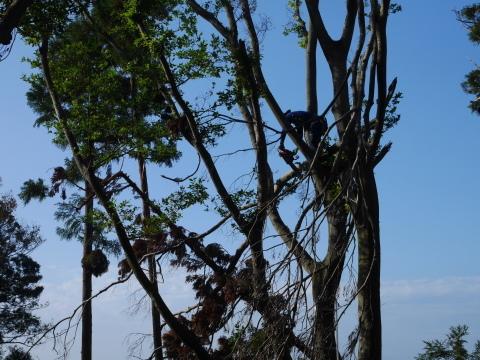 ③山桜植樹で累計475本、500本目前:12・21六国見山手入れ_c0014967_10375250.jpg