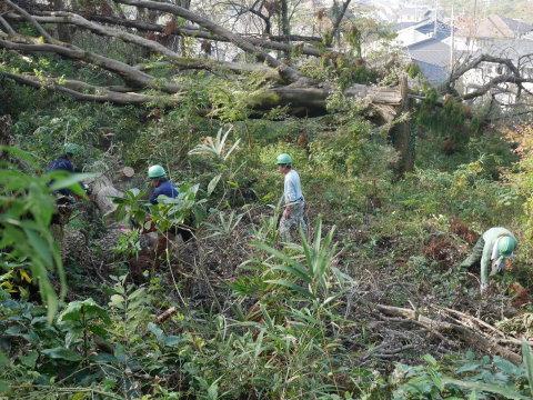 ③山桜植樹で累計475本、500本目前:12・21六国見山手入れ_c0014967_10380370.jpg