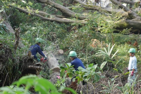 ③山桜植樹で累計475本、500本目前:12・21六国見山手入れ_c0014967_10381525.jpg