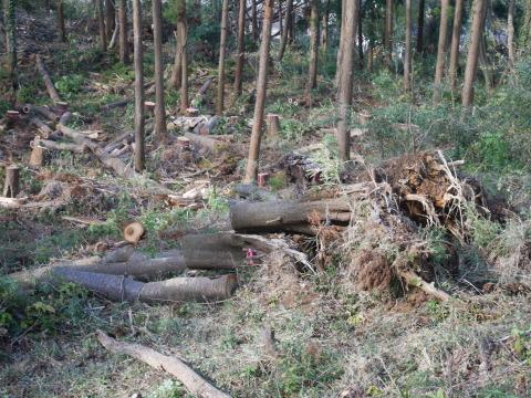 ③山桜植樹で累計475本、500本目前:12・21六国見山手入れ_c0014967_10385295.jpg