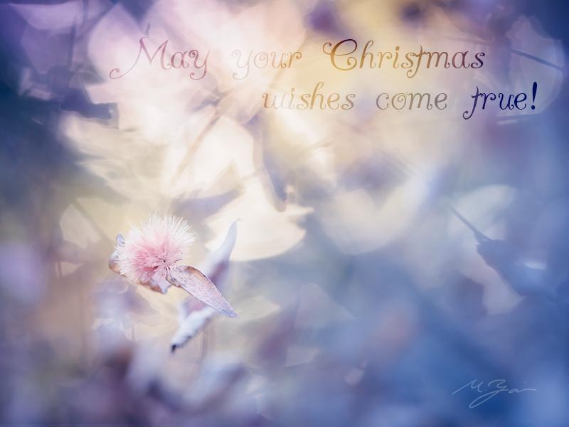 メリークリスマス_a0161380_09425396.jpg