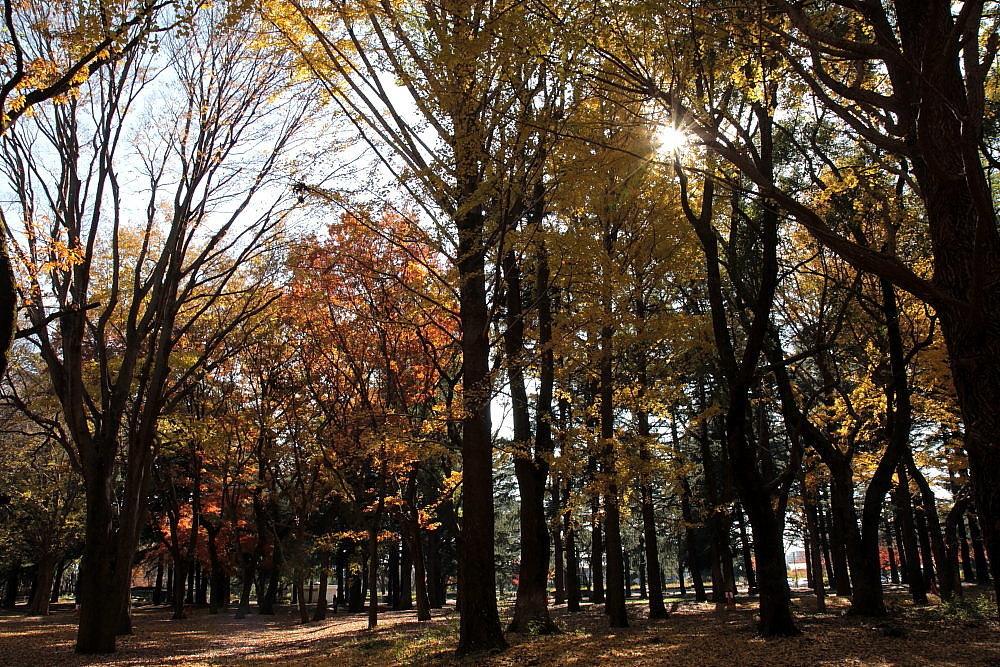 調布市 落葉の野川公園 その6_e0165983_12425322.jpg