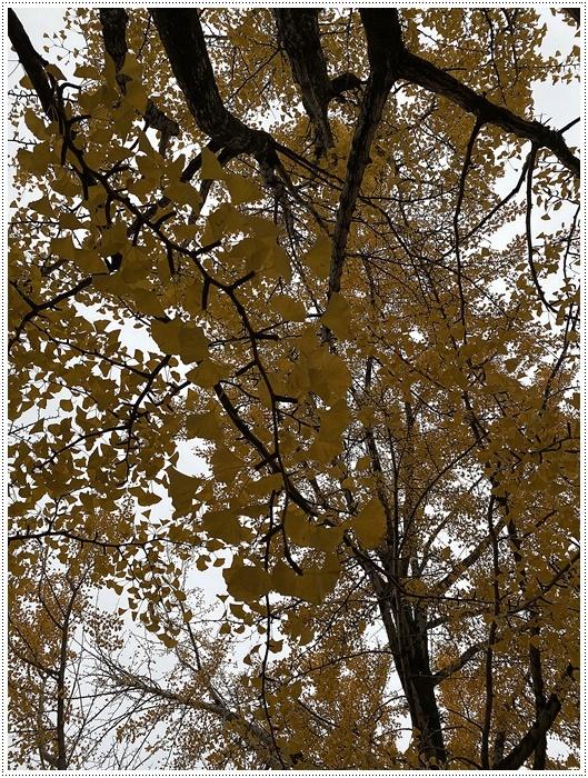 愛知県(名古屋周辺)でのお出かけ その3 意外と近くにあったのに、初めての熱田神宮 (11月28日)_b0175688_00053336.jpg