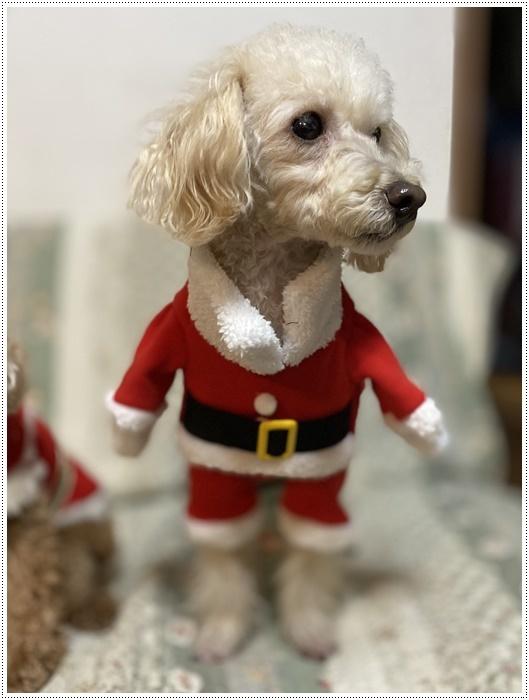 今夜はクリスマスイブ、我が家はクリスチャンではないけど、さくらも大も、色々食べられて、それだけで大満足だね~_b0175688_20433889.jpg