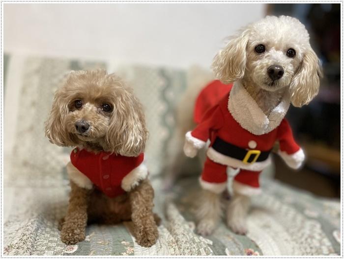 今夜はクリスマスイブ、我が家はクリスチャンではないけど、さくらも大も、色々食べられて、それだけで大満足だね~_b0175688_20434118.jpg