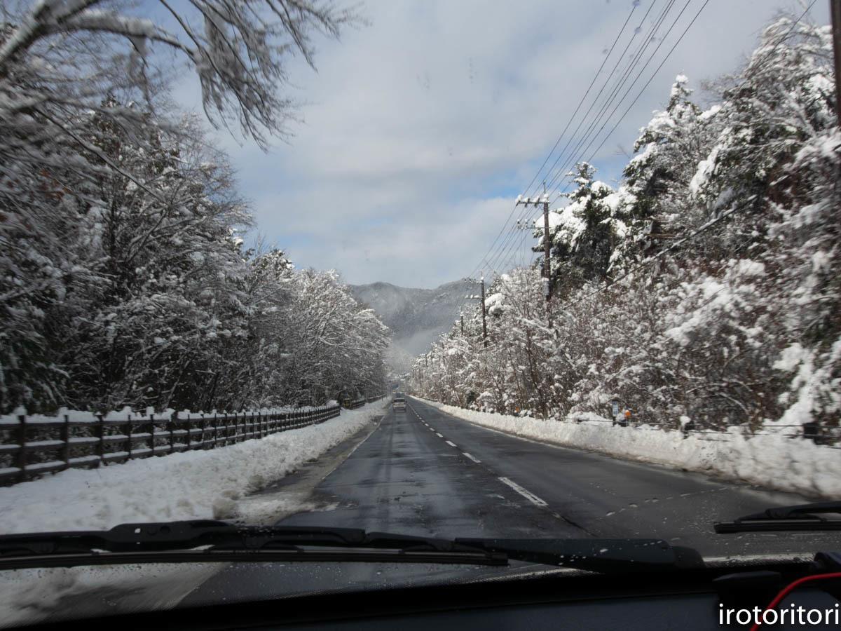 ドライブ  (ベンガルワシミミズク)  2019/12/23_d0146592_00312293.jpg