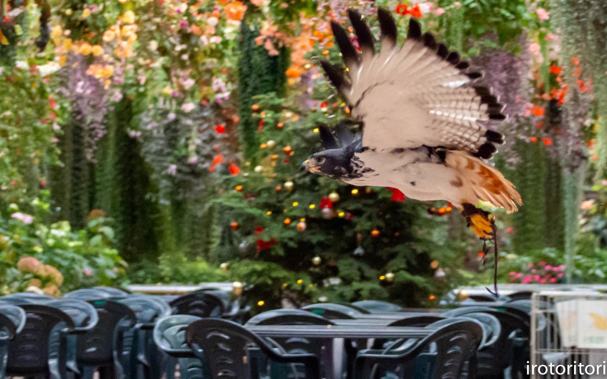 クリスマス イブ!!  (ヨゲンノスリ)  2019/12/24_d0146592_23313617.jpg