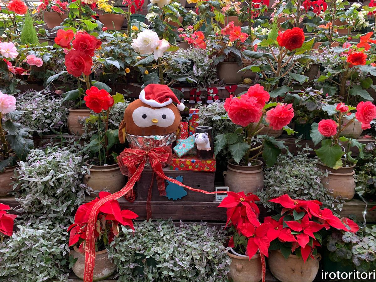 クリスマス イブ!!  (ヨゲンノスリ)  2019/12/24_d0146592_23315413.jpg