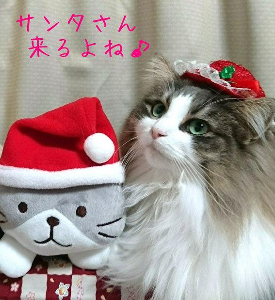 メリークリスマス&ハッピーニューイヤー_b0145296_18184007.jpg