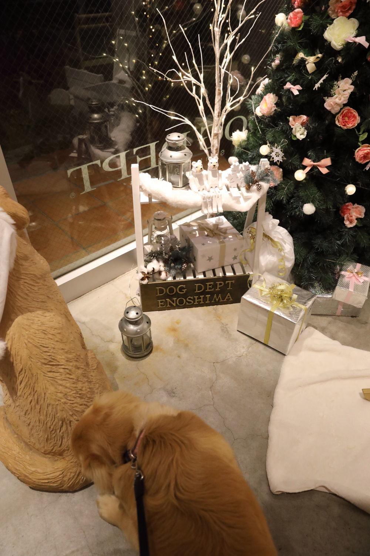 メリークリスマス♪ハナ号♪_b0275998_22204458.jpg