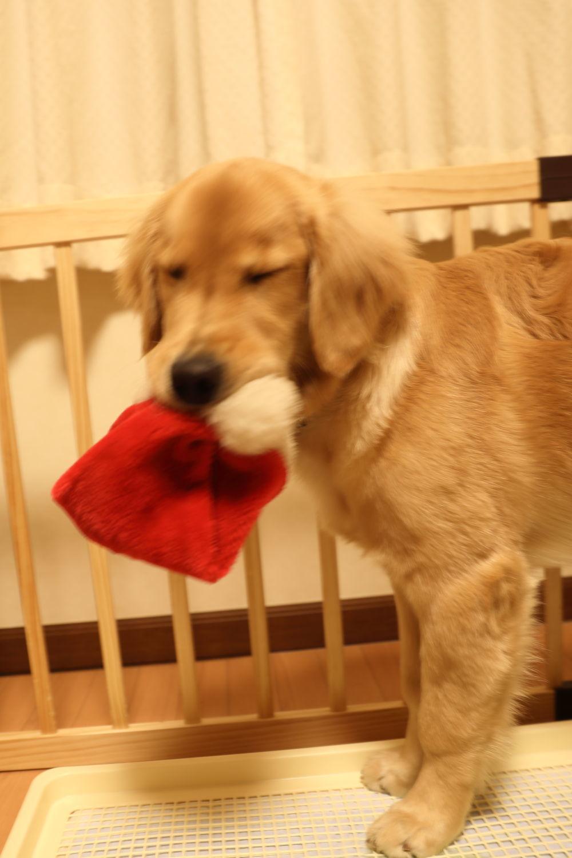 メリークリスマス♪ハナ号♪_b0275998_22550052.jpg