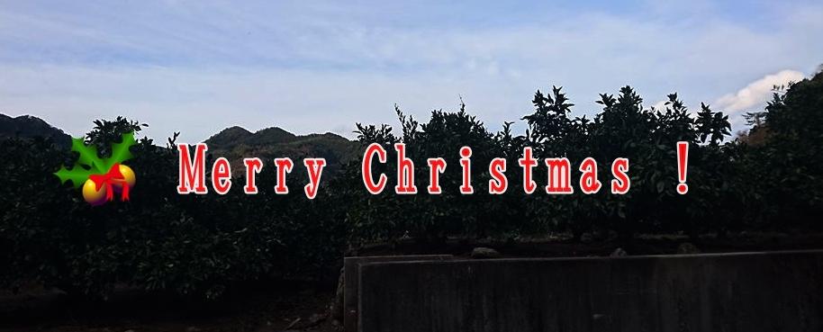 みかん畑からメリークリスマス!_b0028299_21262971.jpg