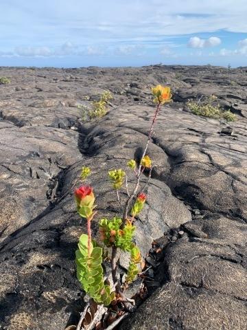 ハワイ島の時間 2019 - 1_d0167002_16134112.jpg