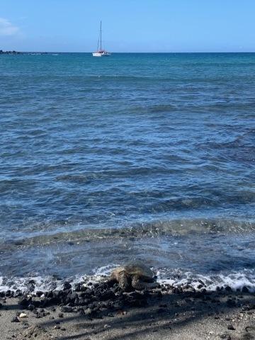 ハワイ島の時間 2019 - 1_d0167002_16314299.jpg