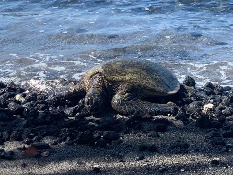 ハワイ島の時間 2019 - 1_d0167002_16343953.jpg