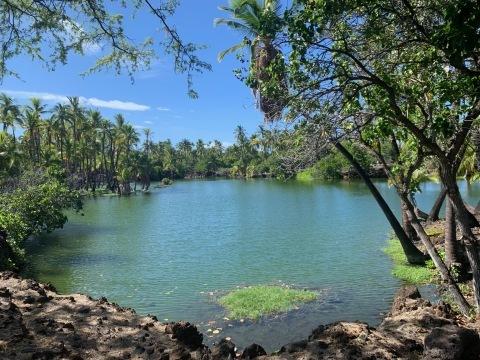 ハワイ島の時間 2019 - 1_d0167002_17020172.jpg