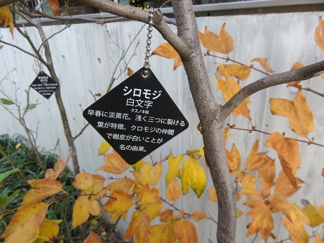 藤堂家上屋敷跡と伊藤伊兵衛(秋葉原散歩②)_c0187004_14255366.jpg