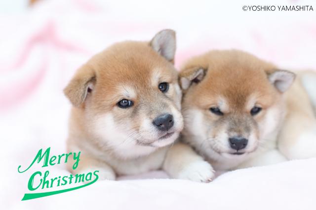 メリークリスマス♡_f0031022_07502785.jpg