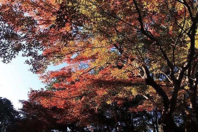 紅葉の大曾根公園散策(撮影:12月8日)_e0321325_13545022.jpg
