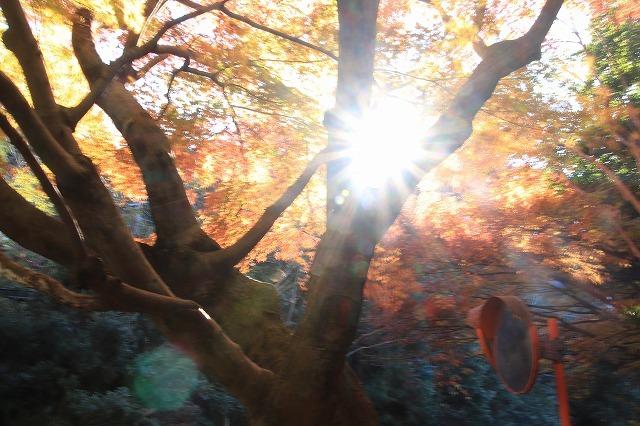 紅葉の大曾根公園散策(撮影:12月8日)_e0321325_13550905.jpg