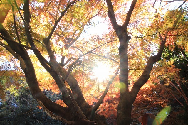紅葉の大曾根公園散策(撮影:12月8日)_e0321325_13552662.jpg