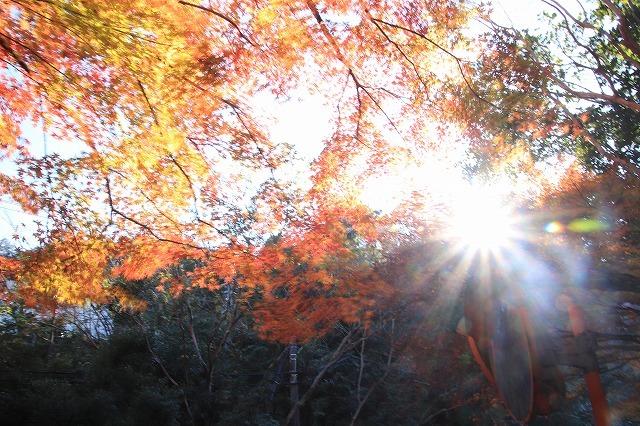 紅葉の大曾根公園散策(撮影:12月8日)_e0321325_13554132.jpg