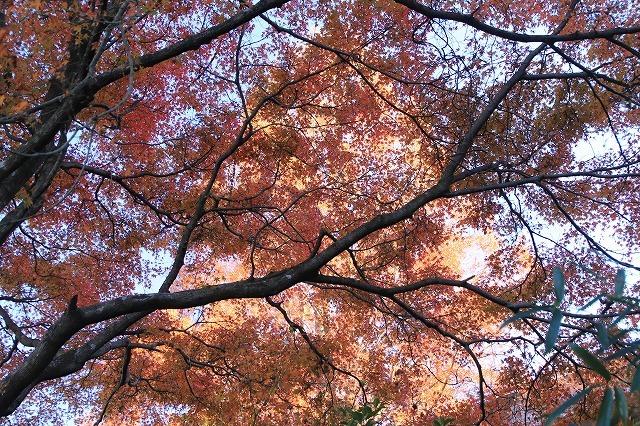 紅葉の大曾根公園散策(撮影:12月8日)_e0321325_13590265.jpg