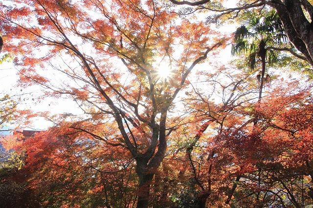 紅葉の天満荘夕景_e0321325_14332460.jpg