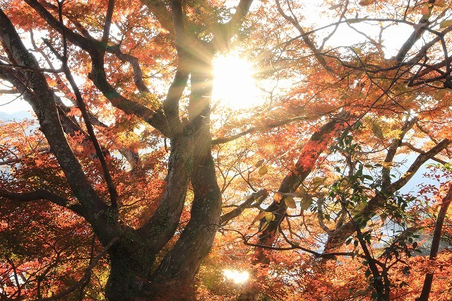 紅葉の天満荘夕景_e0321325_14334885.jpg