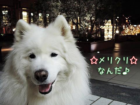 メリ☆クリ_c0062832_14475093.jpg