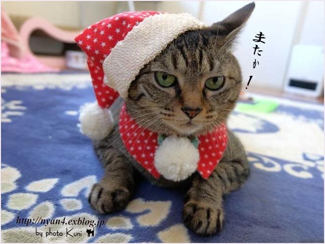 メリークリスマス!_f0166234_22335743.jpg