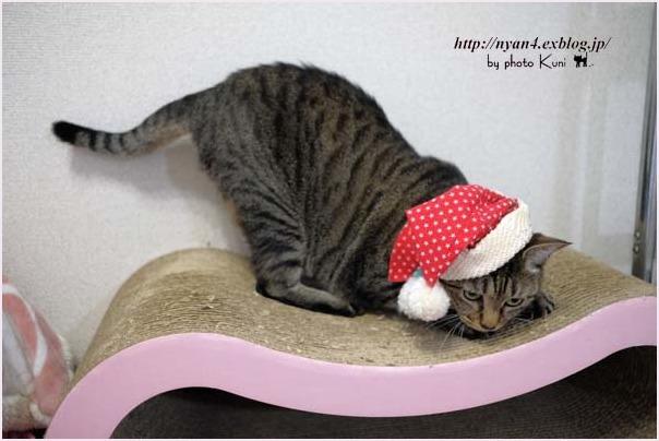 メリークリスマス!_f0166234_22341379.jpg