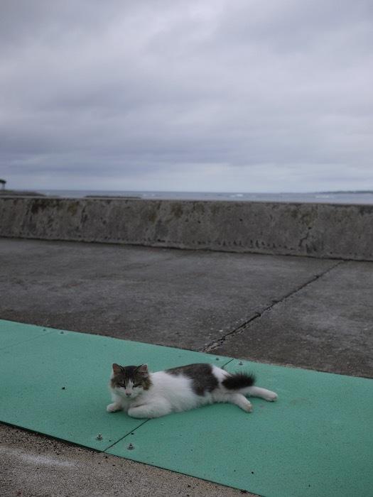 沖縄冬至越えの旅3 備瀬のフクギ並木_e0359436_11093672.jpeg