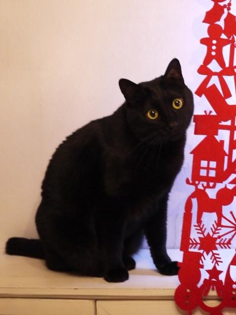 クリスマス猫 ぎゃぉす編。_a0143140_23435968.jpg