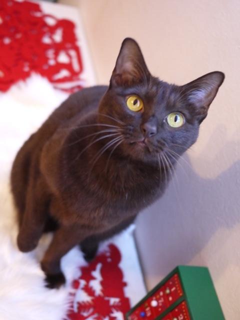 クリスマス猫 あんしゃぁりぃ編。_a0143140_23473882.jpg