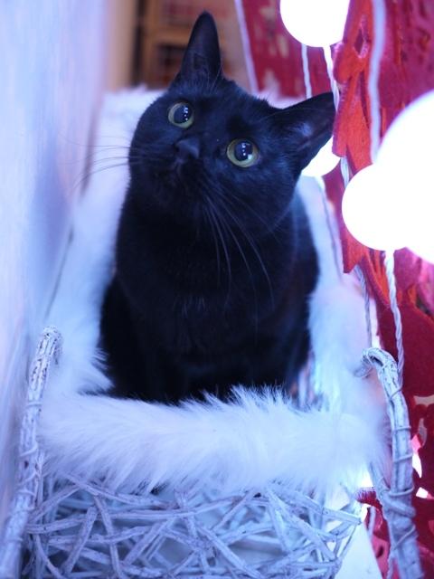 クリスマス猫 めりぃぽぴんず編。_a0143140_23505318.jpg