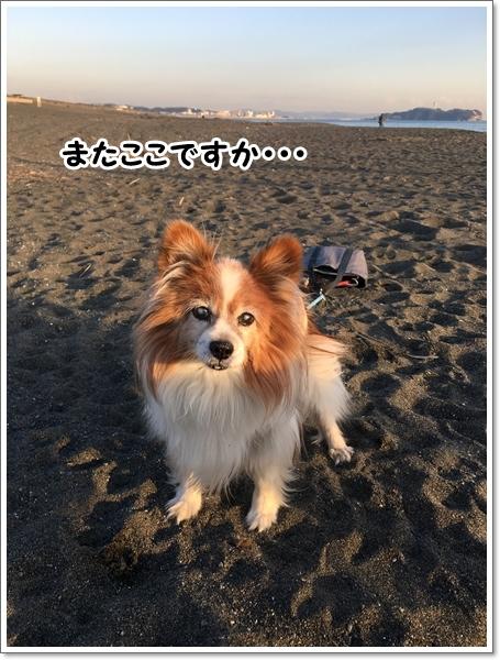 海のちケーキ★_d0013149_23525124.jpg